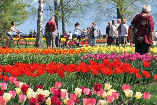 Morges-Tulip-Festival