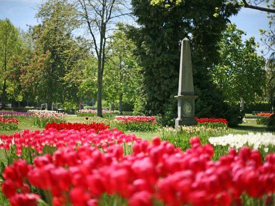 Morges_tulipe_1