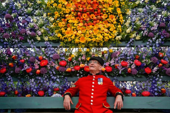 Chelsea-pensioner-admires-display
