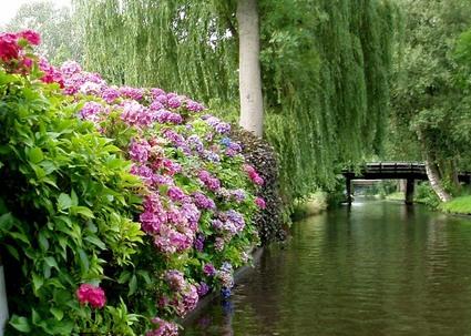 Giethoorn_bloemen
